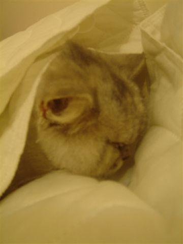 07.10.12 怕冷的大貓