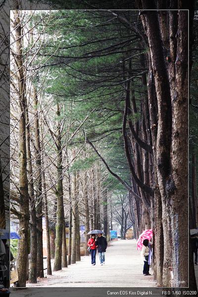 很漂亮的樹...很適合散步..