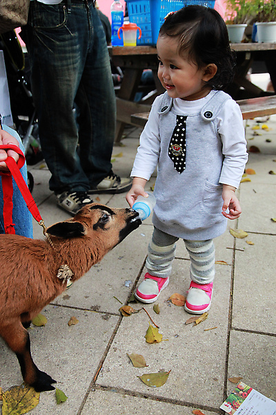 辰辰姐姐在餵小羊~~