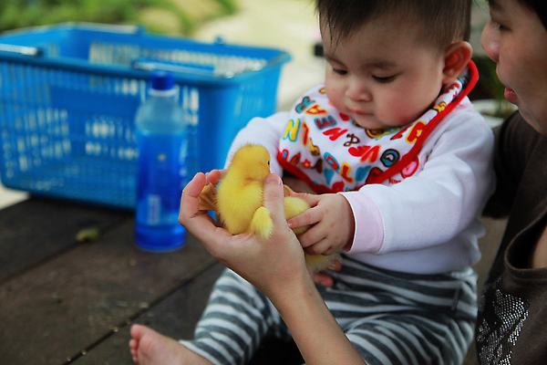 黃色小鴨真可愛~ 和浴缸裏的不太一樣哩...