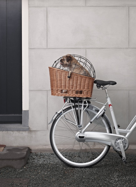 Basil Pasja on bicycle with dog1.jpg