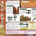 1428-6 嘉義落羽松.油菜花