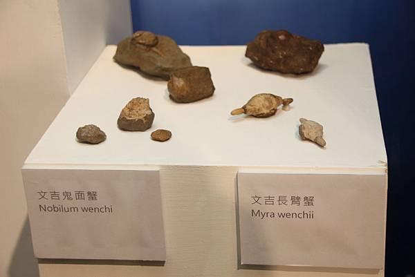 漫步嘉義古淺海化石展