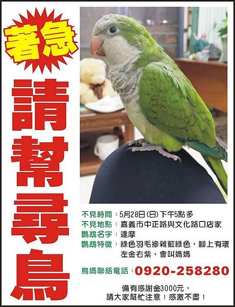 1495-6 尋鳥.JPG