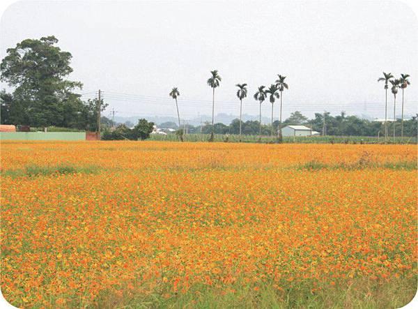 1521-3 中埔花海05.jpg