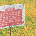 1521-3 中埔花海03.jpg