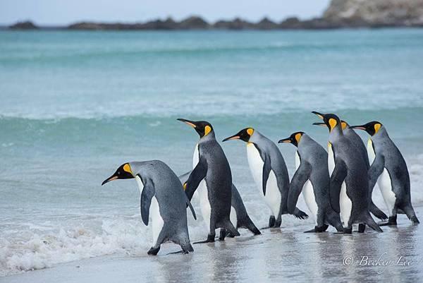 環球療癒企鵝之旅.jpg