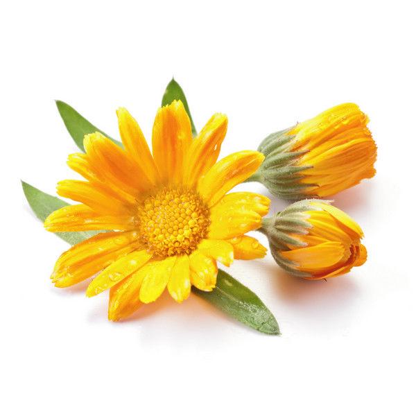 金盞花.jpg