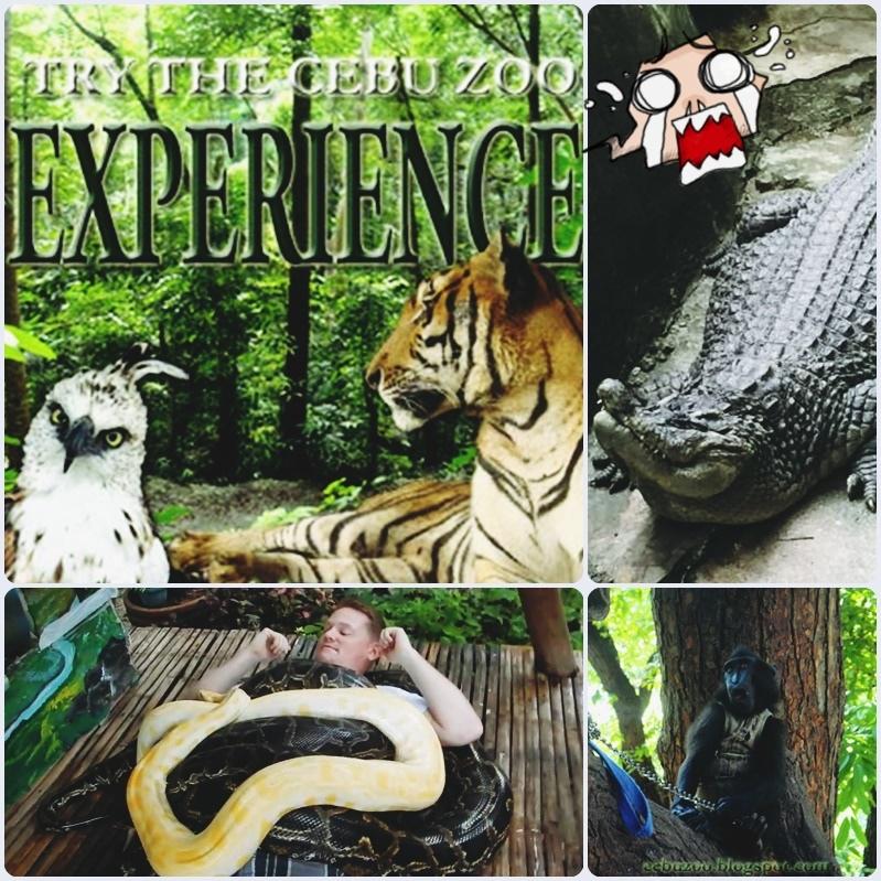 Cebu Zoo.jpg