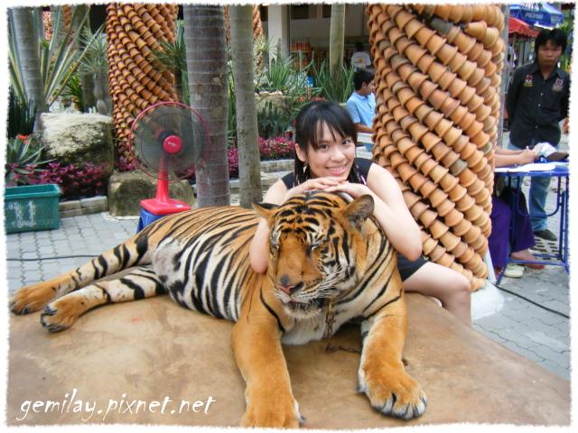 騎大象、龍虎園、東芭樂園 (Nong Nouch Village)