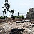 很慵懶的海獅