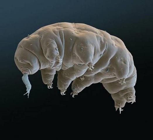 [奇聞軼事] 比外星生物還像外星生物的神奇的緩步動物
