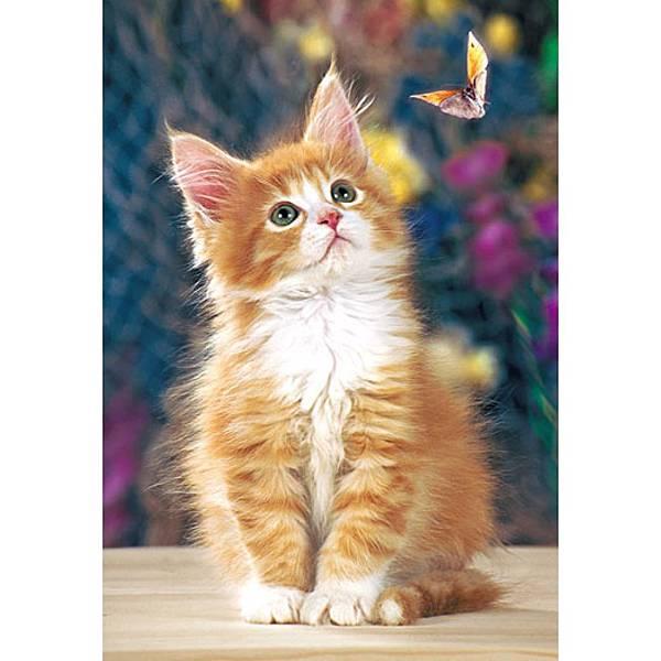 抓蝴蝶的小貓