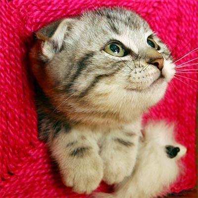 看遠方的貓