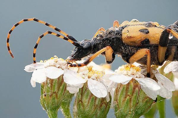 你應該沒看過這麼清晰的昆蟲照-7