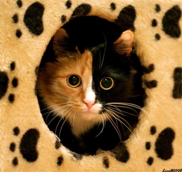 8111820:少裝了!一下就看出來你不是『貓』了