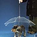 小狗雨傘.jpg