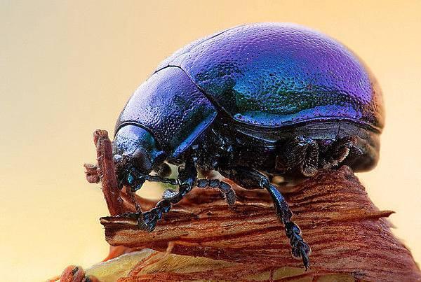 你應該沒看過這麼清晰的昆蟲照-5