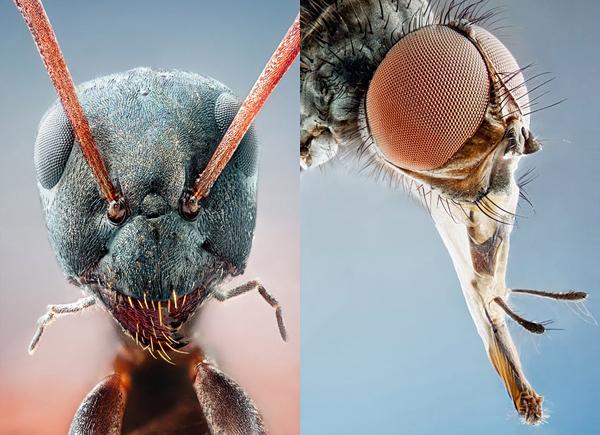 你應該沒看過這麼清晰的昆蟲照-9