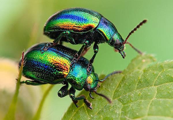 你應該沒看過這麼清晰的昆蟲照-6
