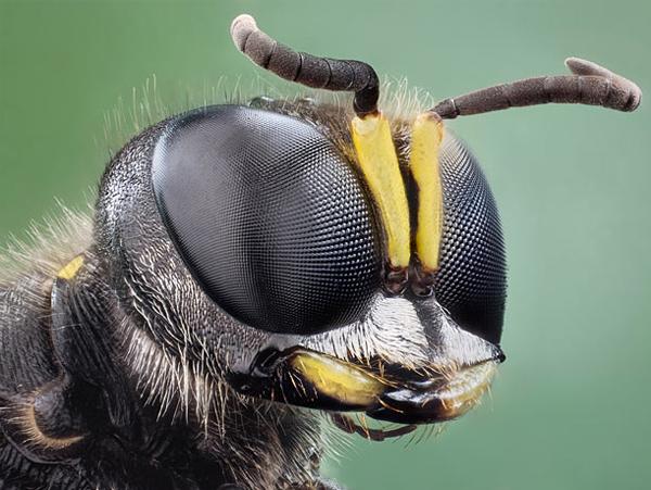 你應該沒看過這麼清晰的昆蟲照-12