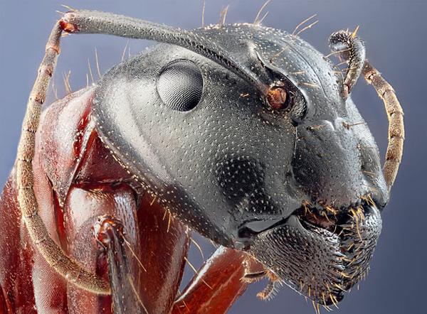 你應該沒看過這麼清晰的昆蟲照-8