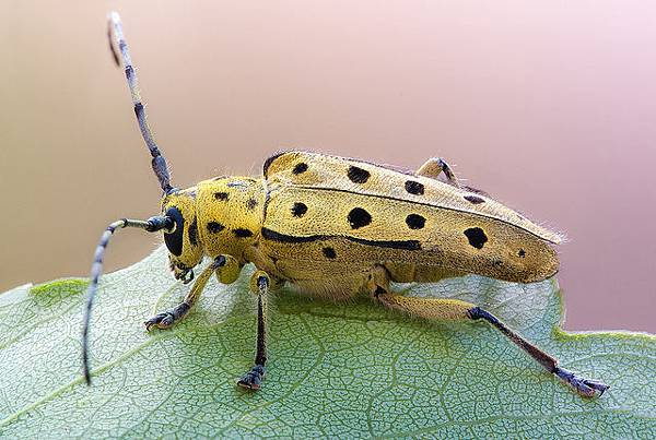 你應該沒看過這麼清晰的昆蟲照-2