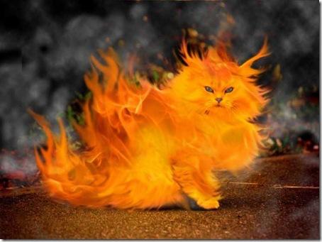 超能力貓-3