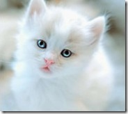 貓貓-小咪-gemini