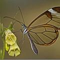 8023366:美麗的蝴蝶