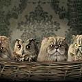 貓與貓頭鷹.jpg