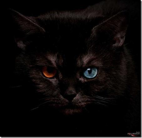 超能力貓-4
