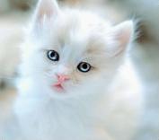 貓貓-小咪-gemini.jpg