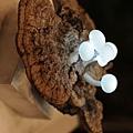令人非常驚豔的蘑菇造型LED燈