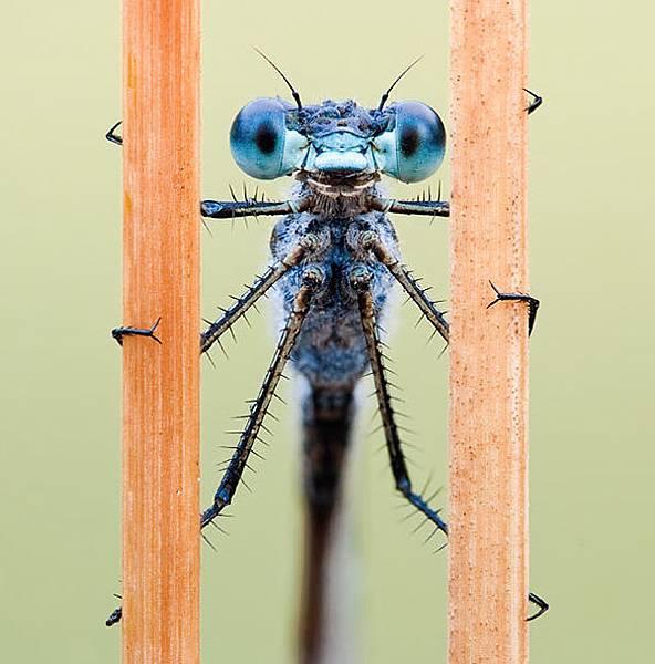 你應該沒看過這麼清晰的昆蟲照-10