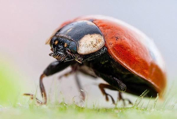 你應該沒看過這麼清晰的昆蟲照-3