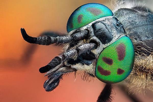 你應該沒看過這麼清晰的昆蟲照-1