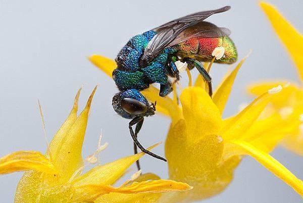 你應該沒看過這麼清晰的昆蟲照-4