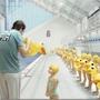 7161046:史上最辛苦的游泳教練