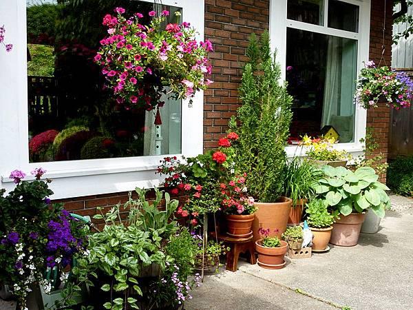 A garden in flower pots 1.JPG