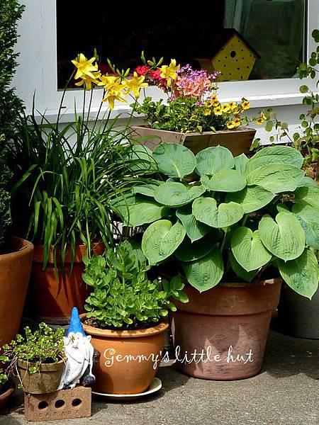 A garden in flower pots3.JPG