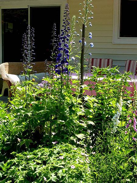 June garden 181.JPG