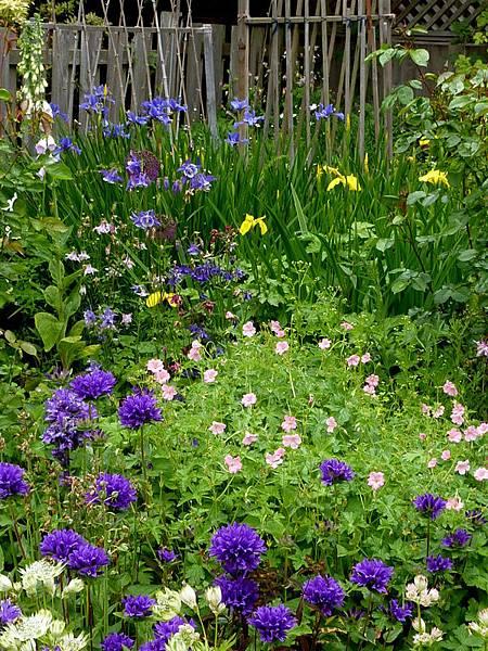 June garden 010.JPG