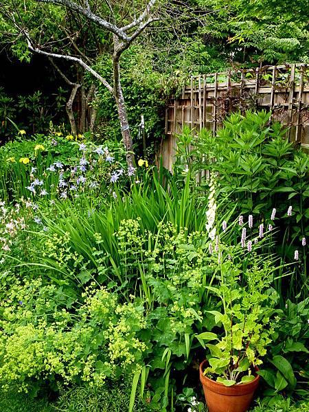 June garden 018.JPG