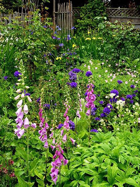 June garden 011.JPG