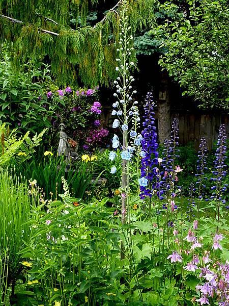 June garden 017.JPG
