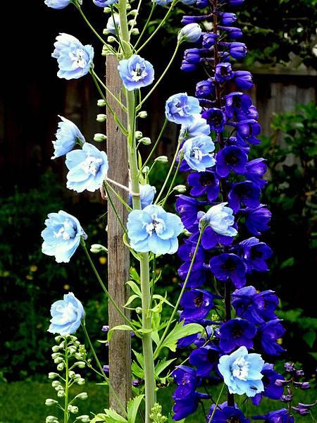 June garden 022.JPG