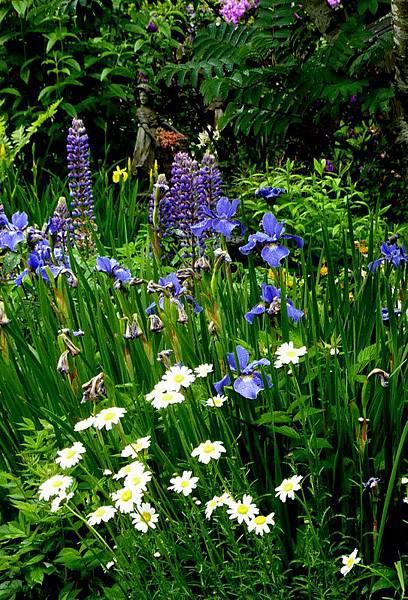 garden in the rain 121.JPG