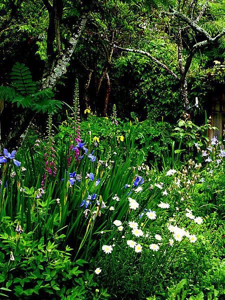 garden in the rain 115.JPG
