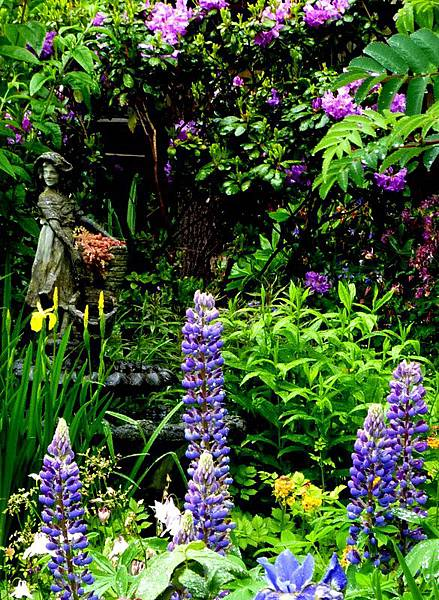 garden in the rain 117.JPG